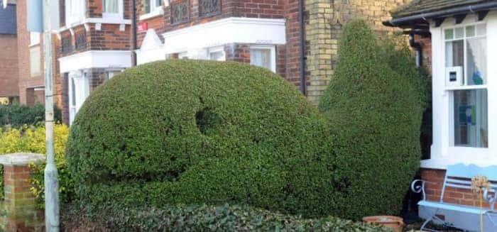 whale hedge