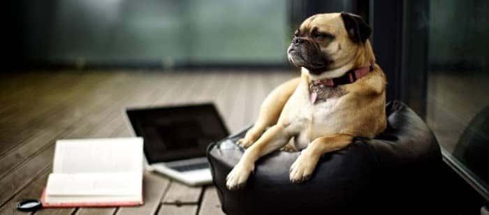 dog-distraction