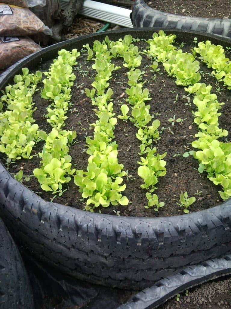 spring-gardening-hacks-airtasker-5