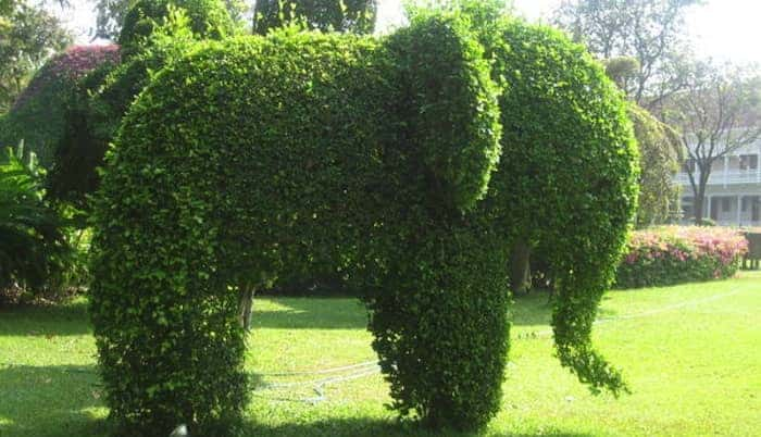 Elephant_hedge