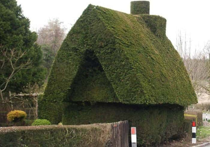 house hedge