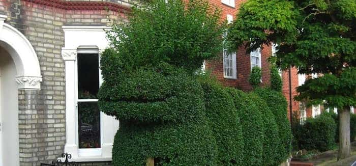 Ten Hilarious Garden Hedges