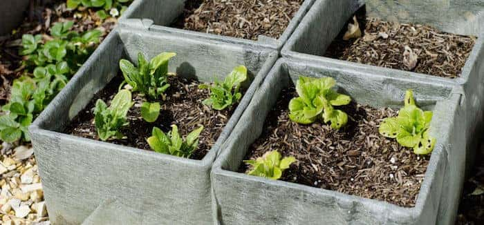 7 Simple Home Gardening Hacks
