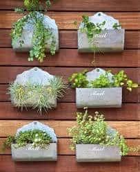 small garden - herb