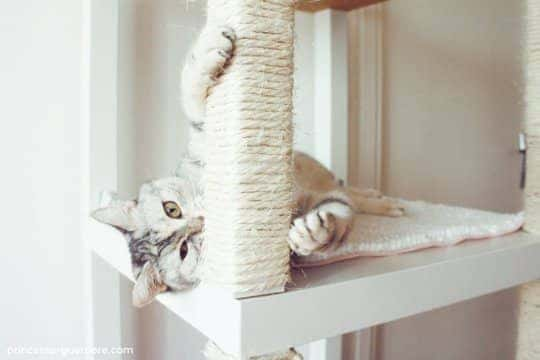 Ikea Furniture Hacks For Cat Owners Airtasker Blog