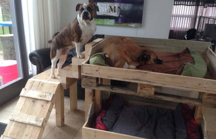 Why Dog Digs Bed