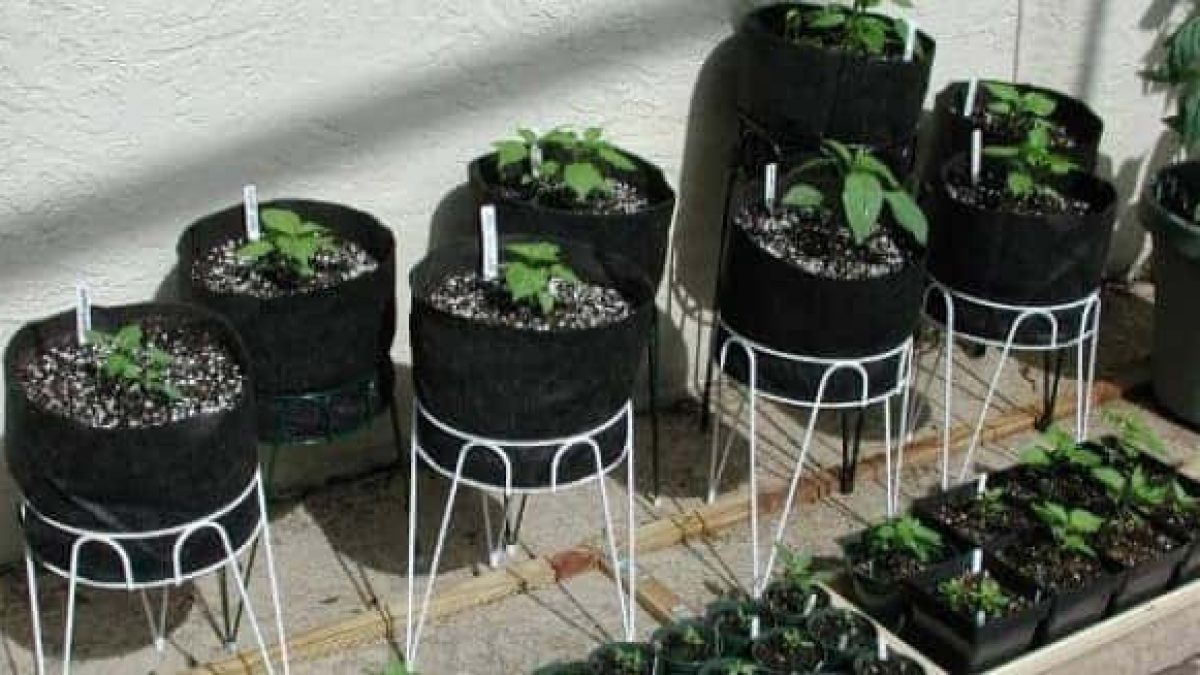 How To Grow Vegetables In Your Apartment | Airtasker Blog