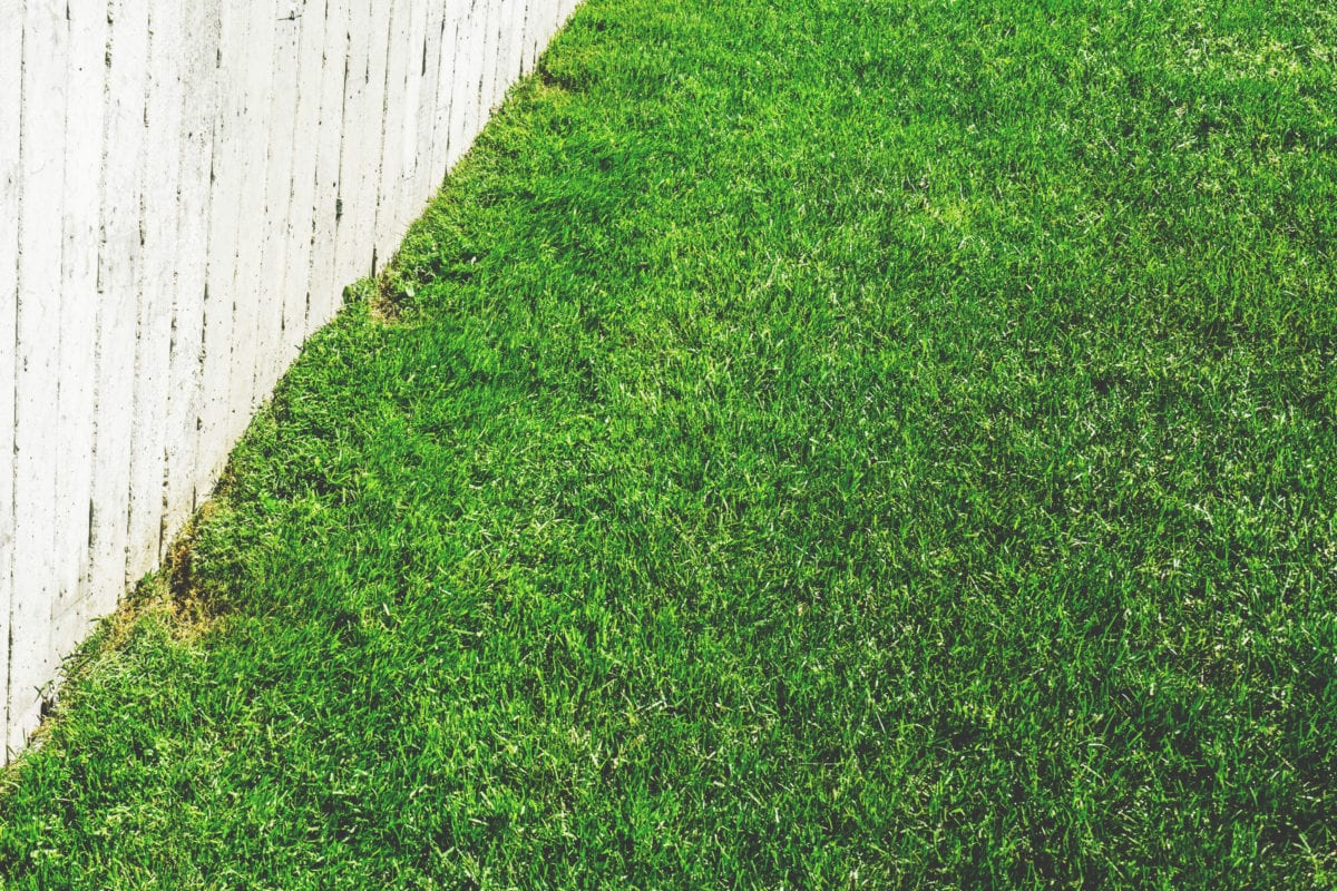 Lawn care for Sydney homes