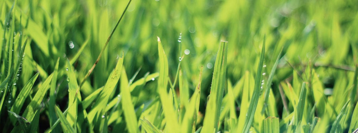 Lawn Maintenance Tips for Summer