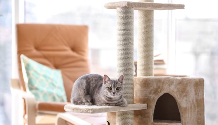 How To Stop Your Cat From Scratching Your Furniture Airtasker Blog