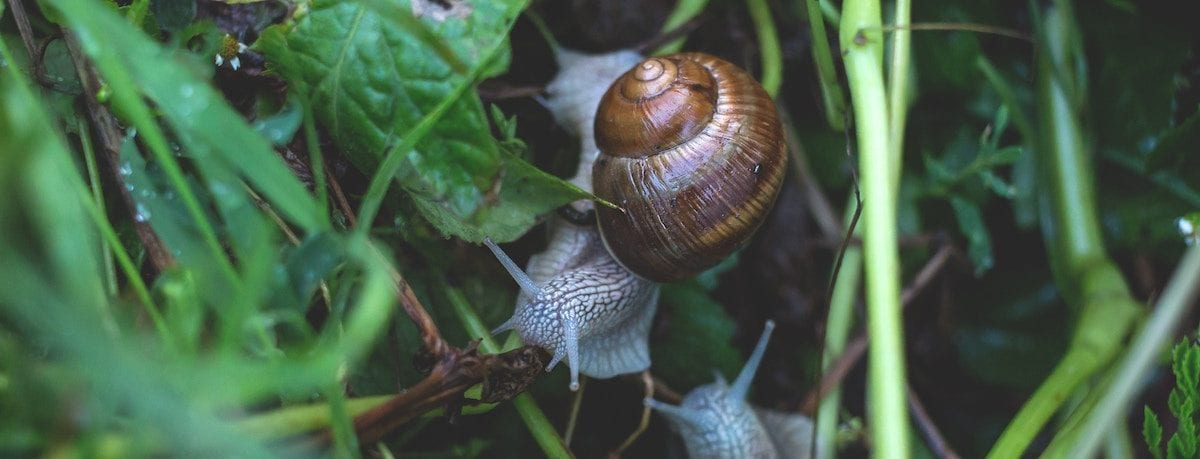 Home and garden pests in autumn