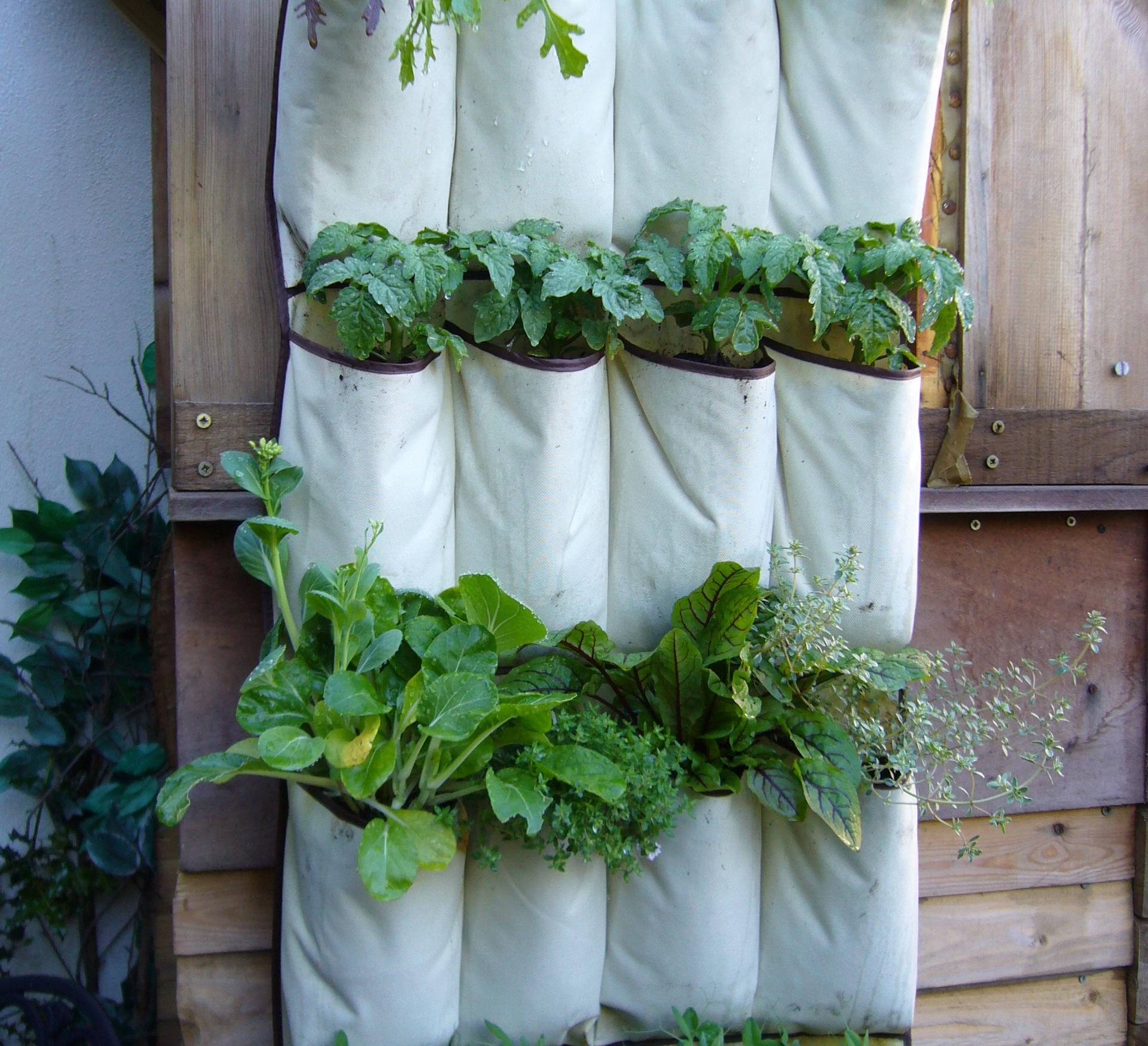 Gardening Services in London