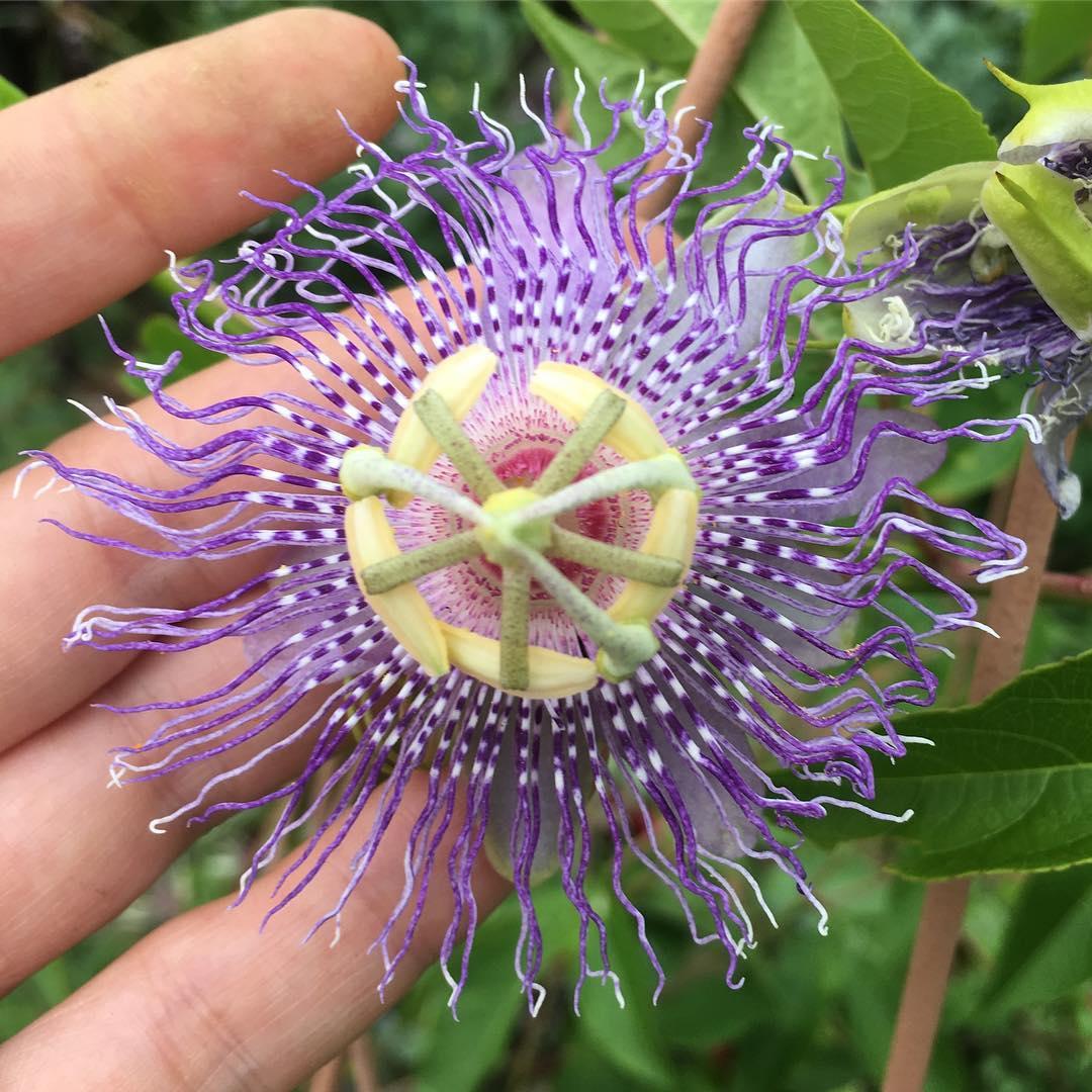 best gardening blogs in UK