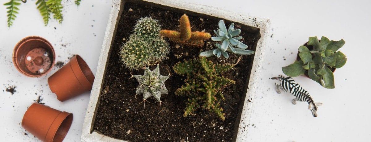 Top time-saving gardening tips