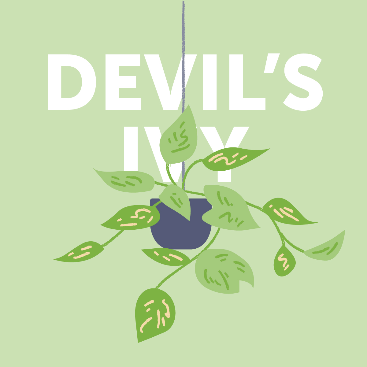 Devil's ivy indoor plant