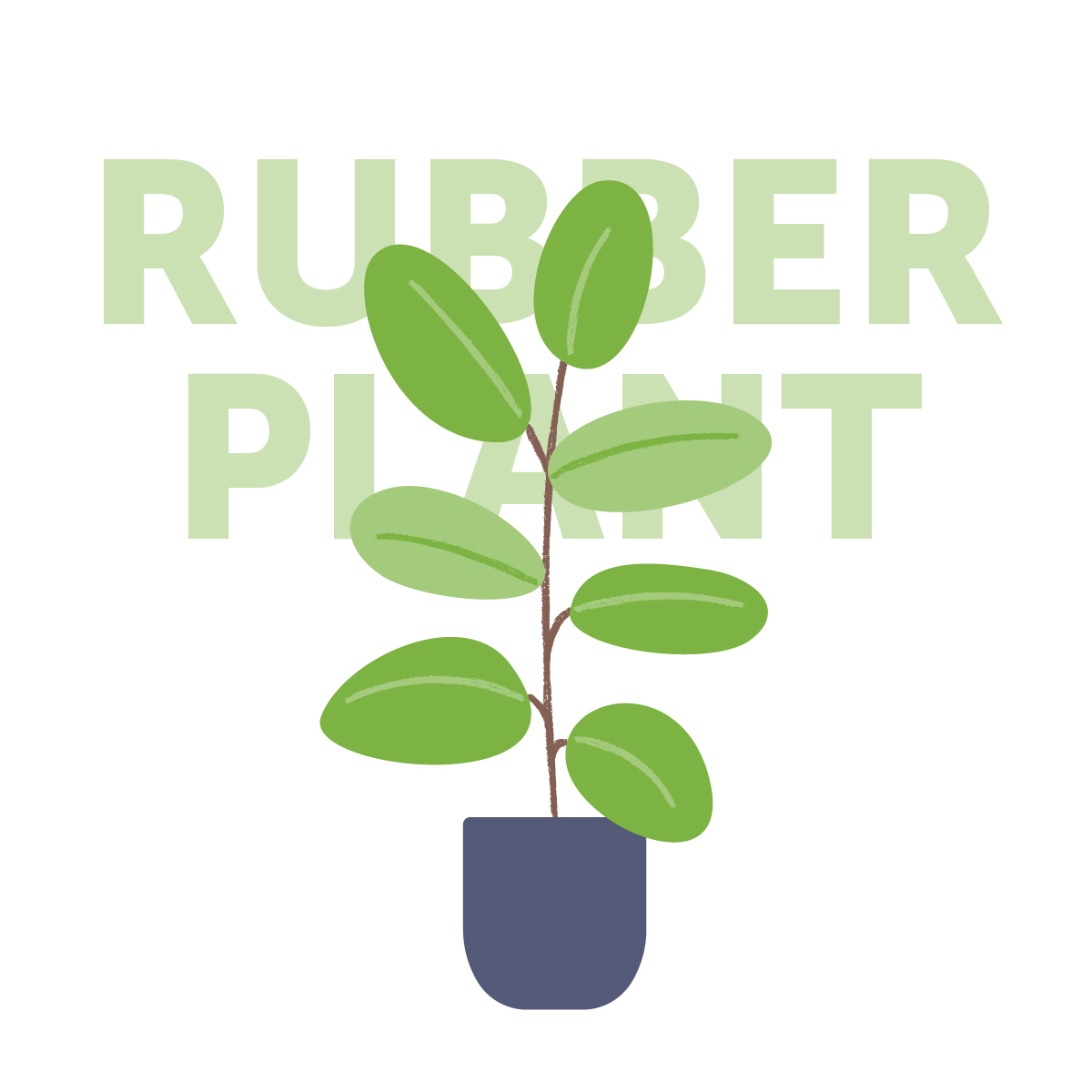 Rubber plant indoor plant | Airtasker Life Skills