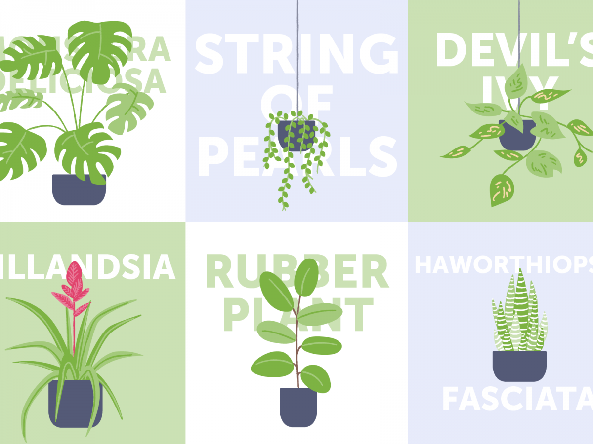 The Best Indoor Plants For Australian Homes And Where To Get Them Airtasker Blog