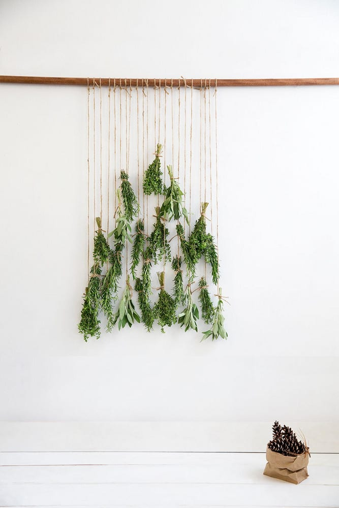 Bunches of herbs hanging on string in tree shape