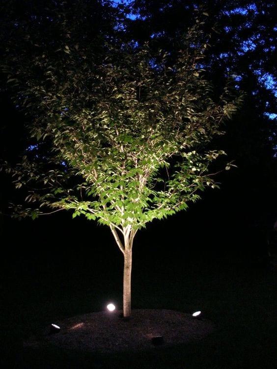 lighting up a tree in backyard