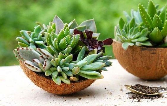 backyard-ideas-succulent-plant-pot