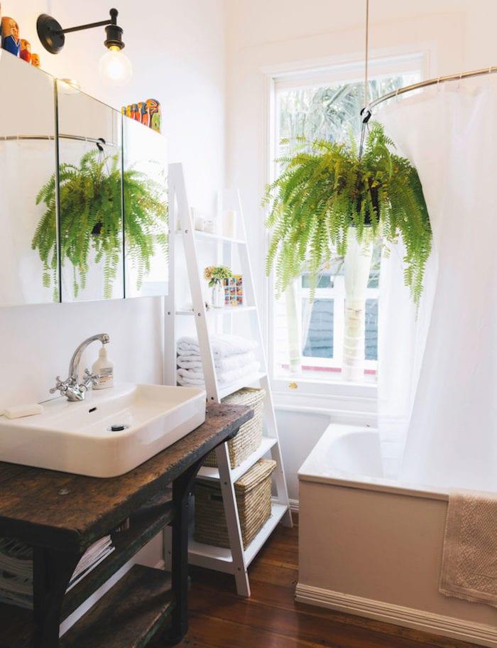 Hanging bathroom plants