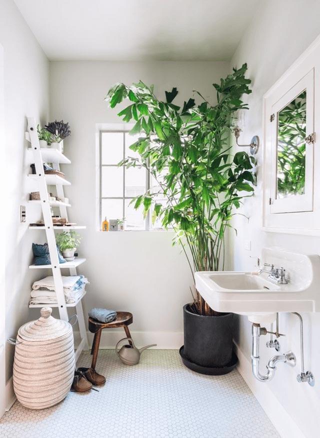 Pot plant in bathroom