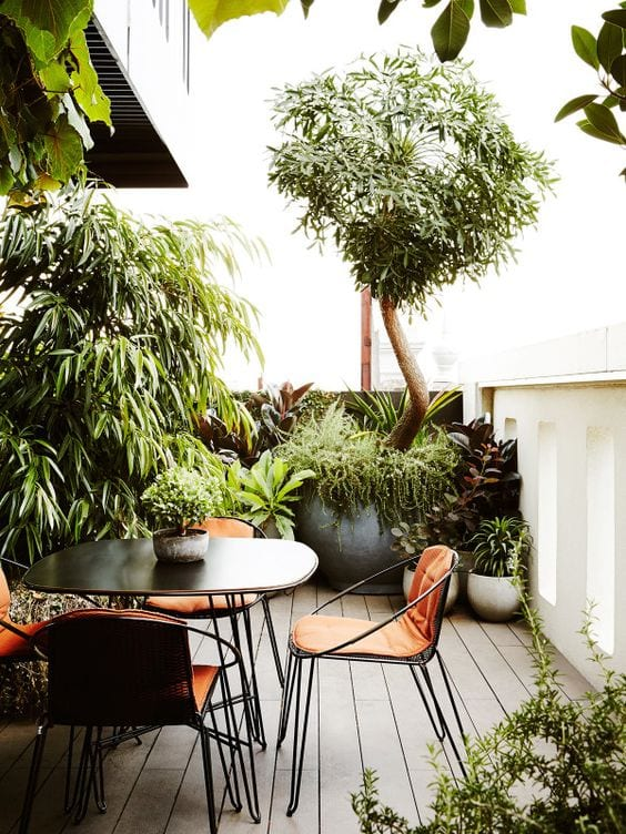 Roof top balcony potted plants