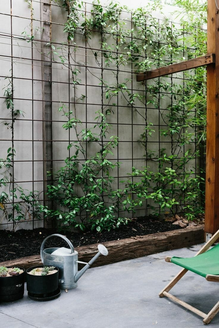privacy fence ideas with plants