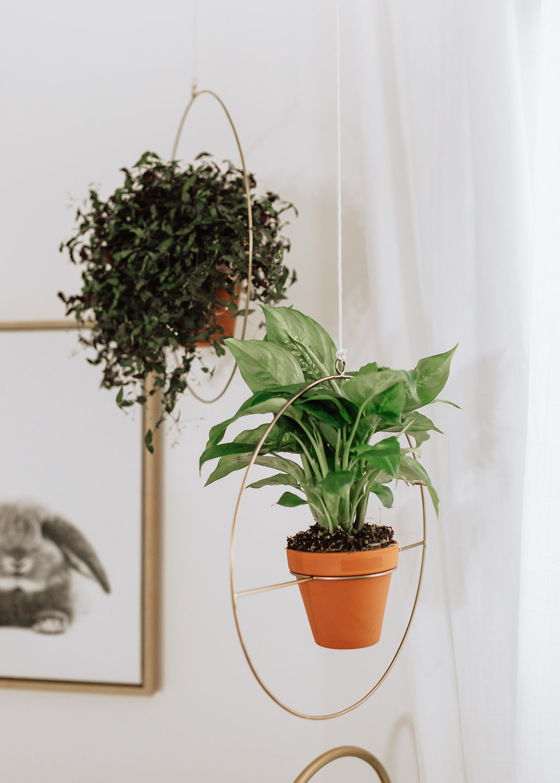 Hanging plants in nursery