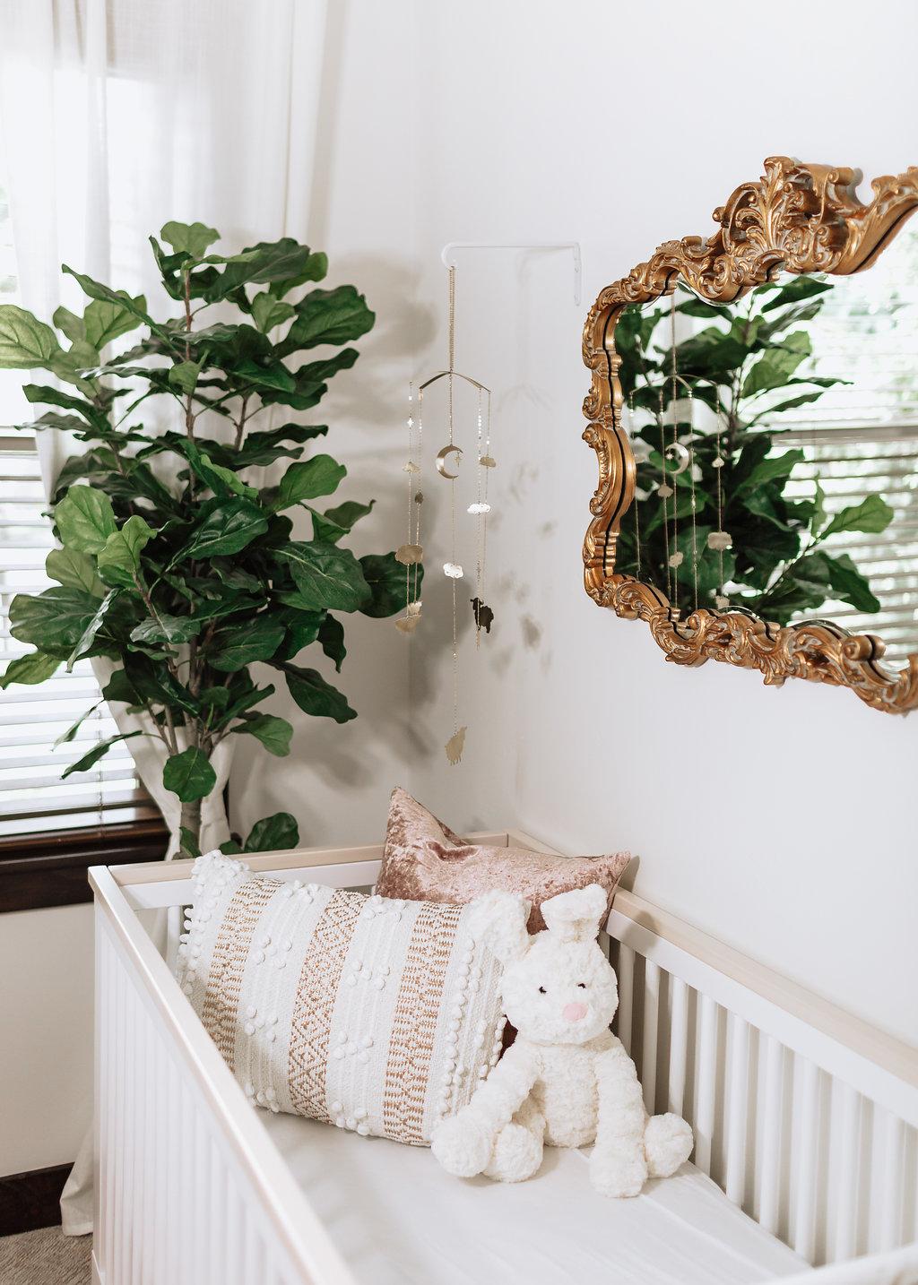 Plants in nursery