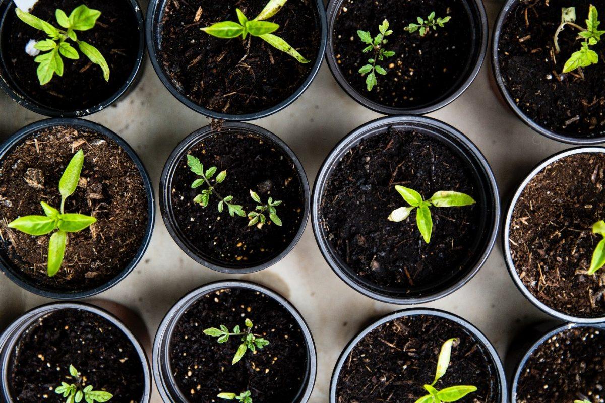 33+ Raised garden bed ideas – DIY garden beds
