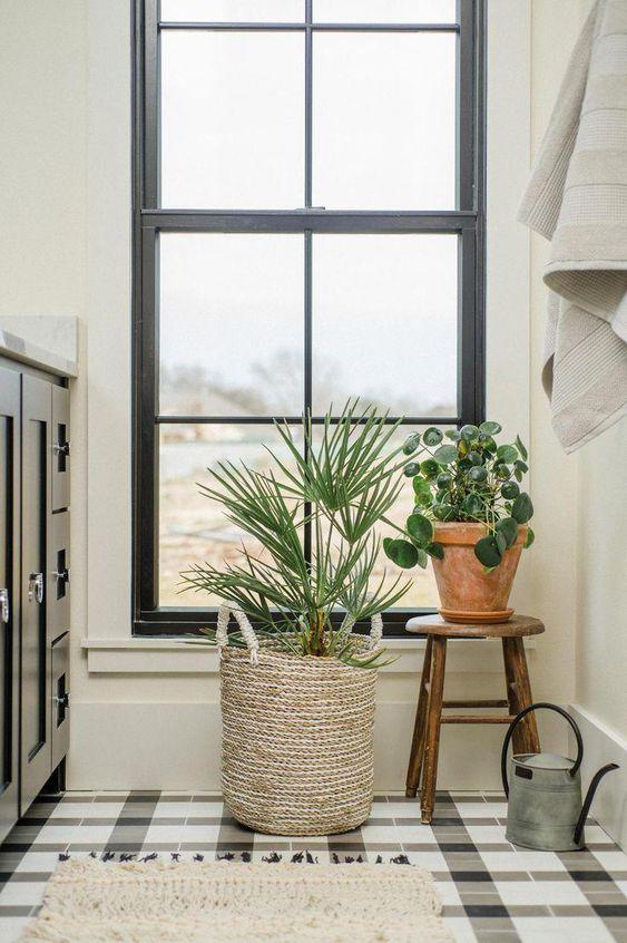 feature plants