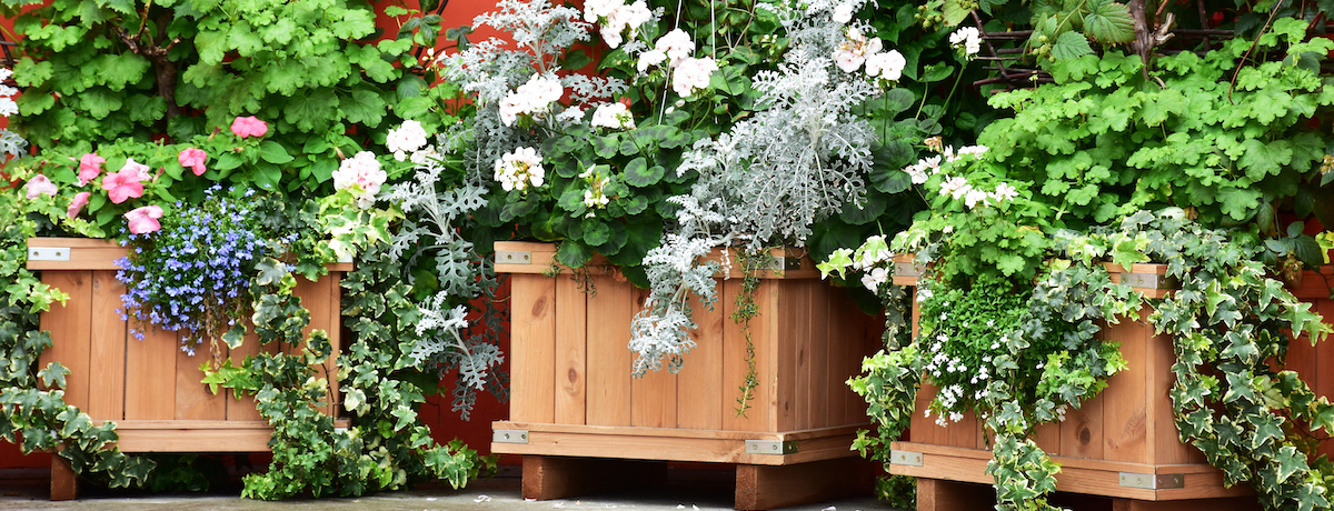 Planter Boxes Where To Buy Them And How Much