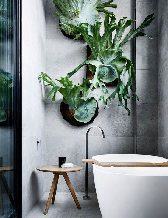 staghorn above bath