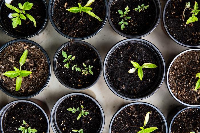 vegetable-garden-seedling