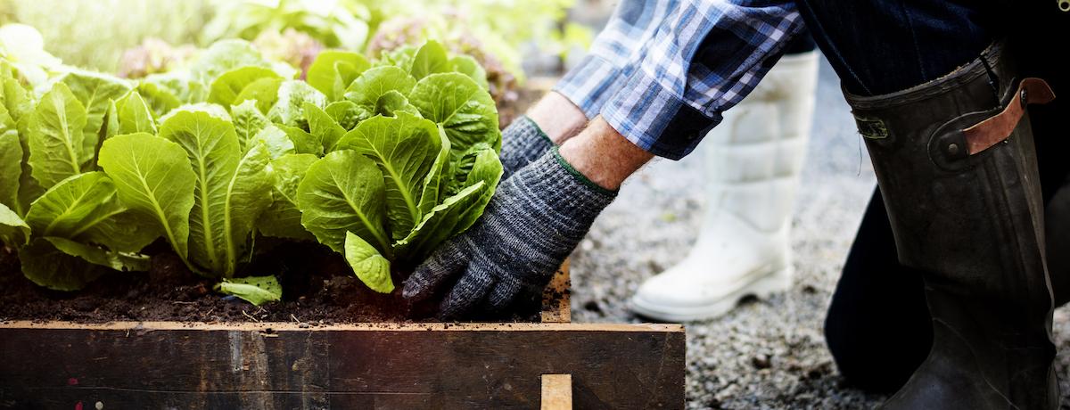vegetable-garden-winter