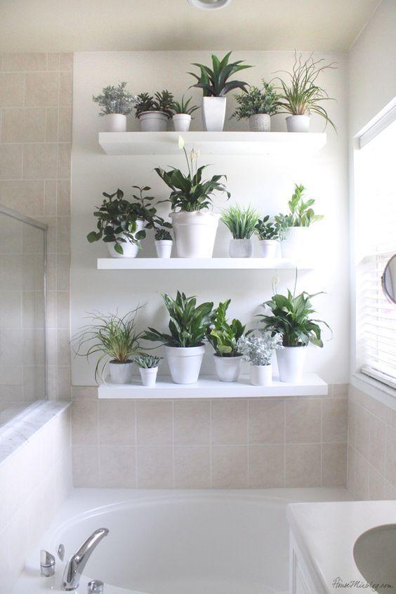 white shelving plant wall