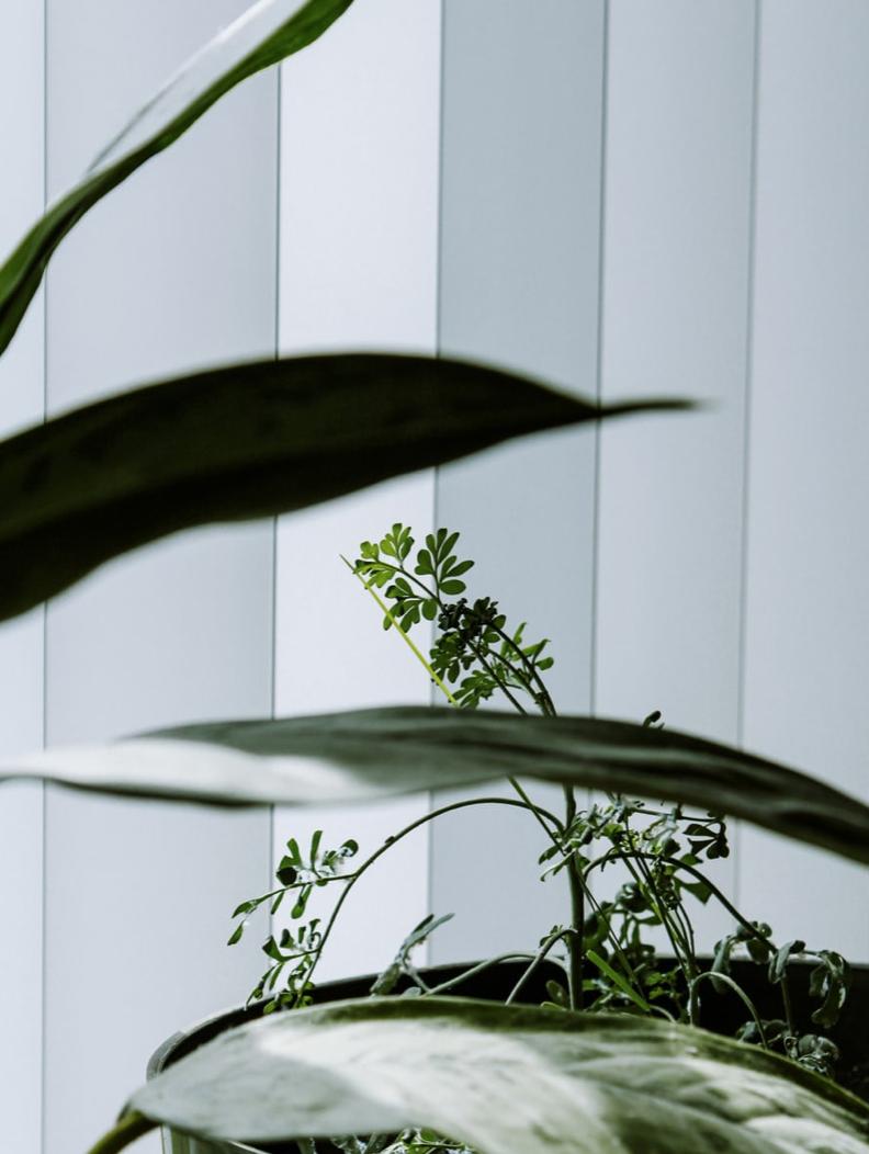 Crisp white vertical blinds