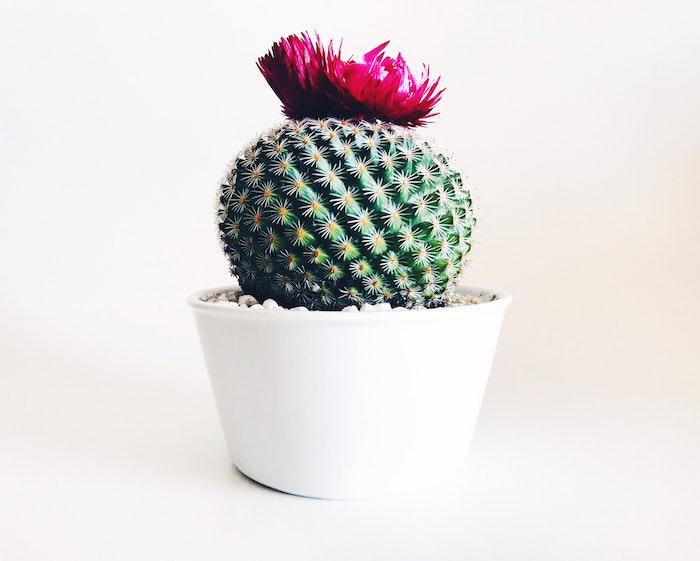 propagate-cactus