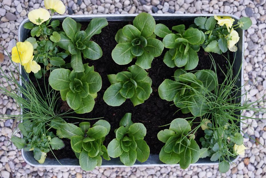 Pots in garden