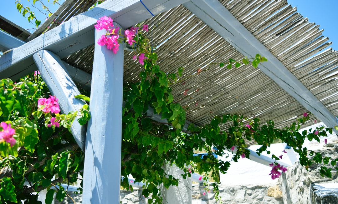A pergola with flowers