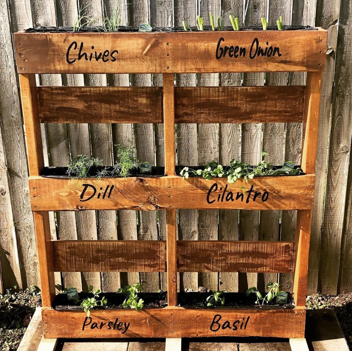 Herbs in palette