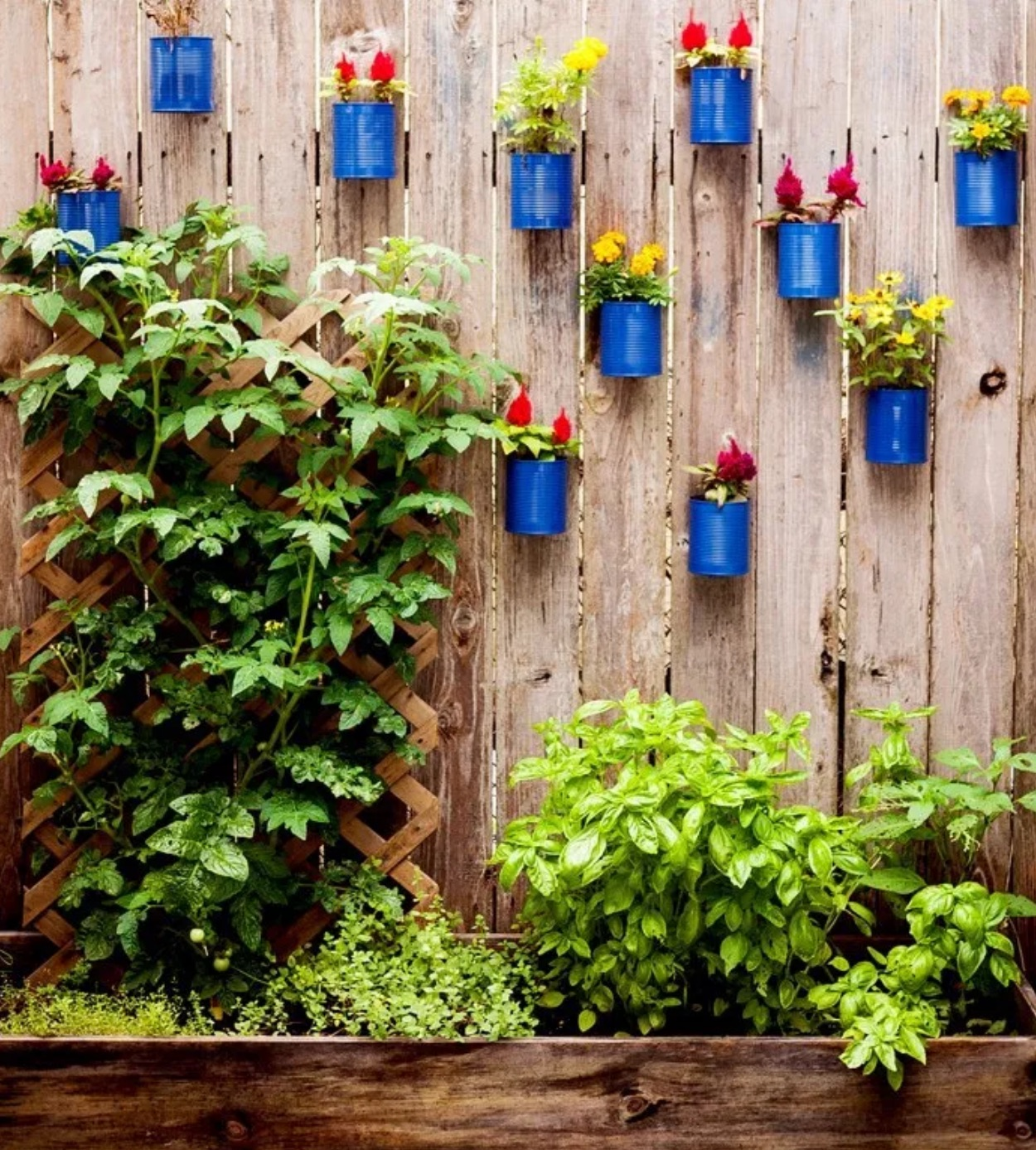 Tin cans on fence