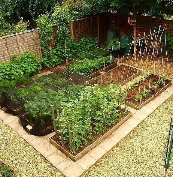 35 Vegetable Garden Design