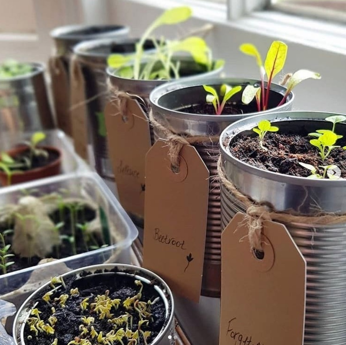 Plants in tins