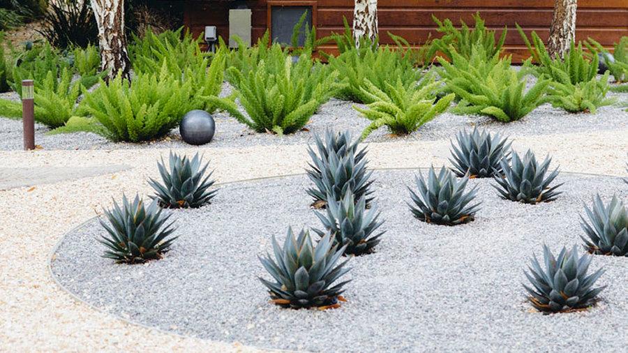 succulents as accent plants