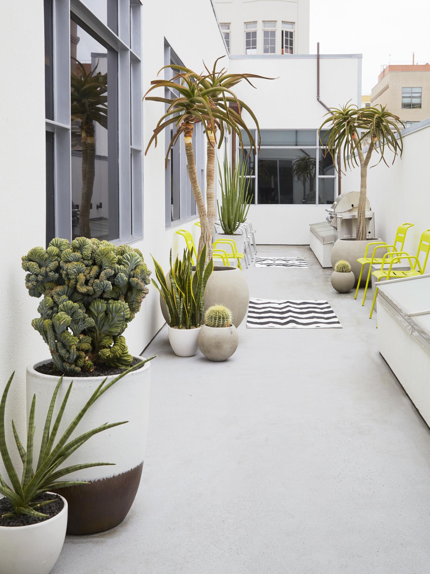 aloe succulent garden ideas