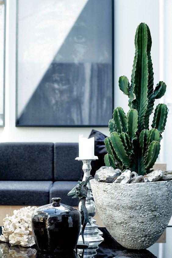 another indoor succulent arrangement