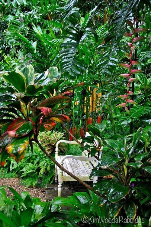 bench nestled in tropical garden
