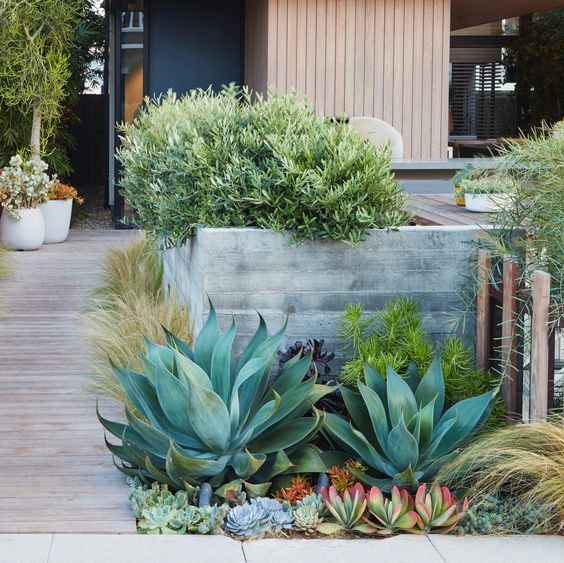 coastal succulent garden ideas